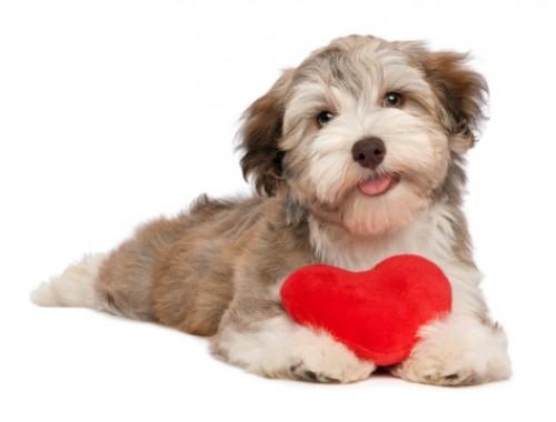 Un grazie di cuore grande grande trib animale onlus - Valentines day pictures with puppies ...