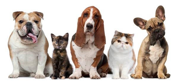 Il Cibo Dannoso Per I Vostri Animali