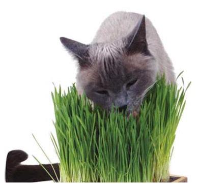 L 39 erba gatta non muore mai trib animale onlus for Erba gatta effetti