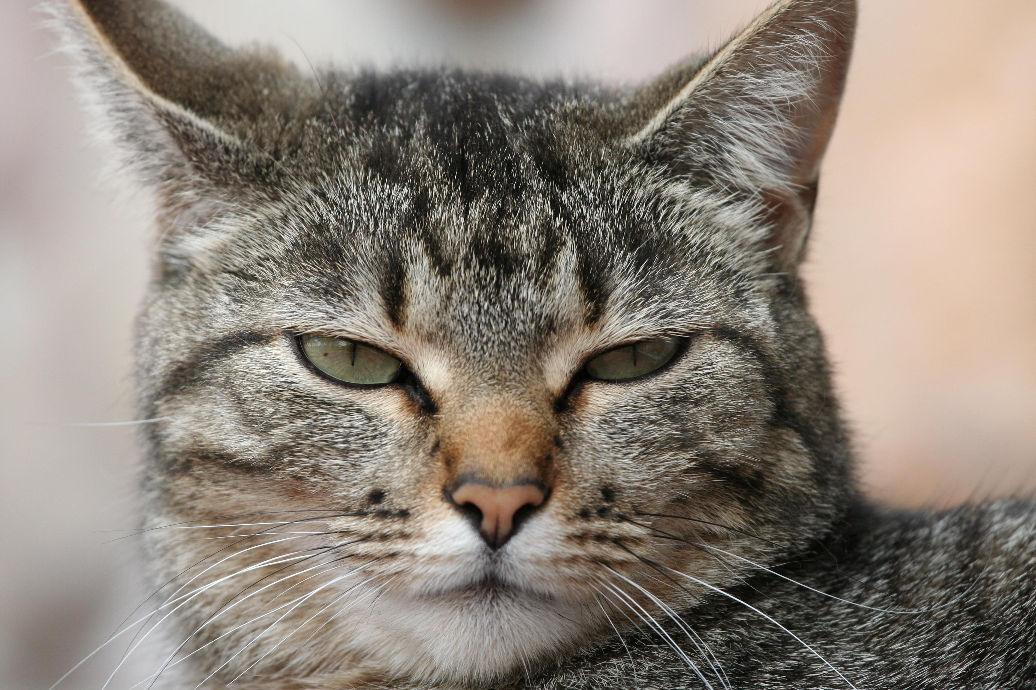 Curiosità animali il mio gatto non obbedisce tribù