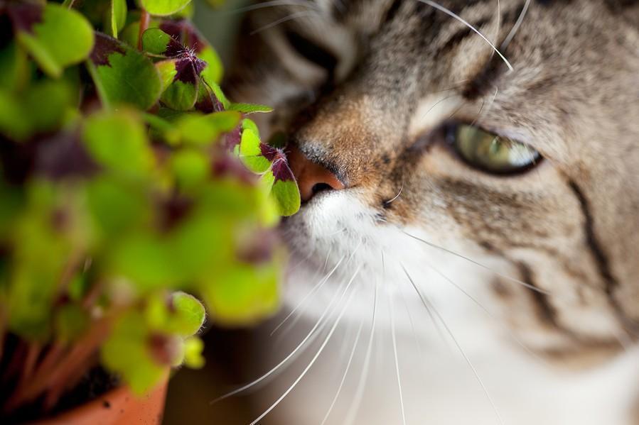 Risultati immagini per gatti e piante