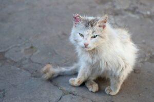 gatto_ferito