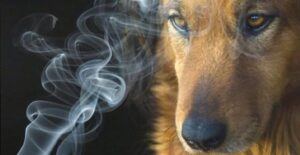 fumo uccide gli animali